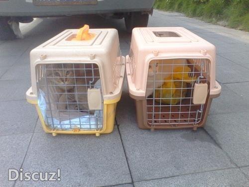 万州每天往返武汉合肥南京常州无锡苏州南通上海,宠物托运