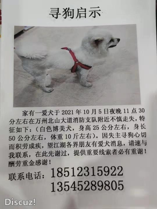 寻狗启示,家有一爱犬在万州北山大道消防支队附近不慎走失